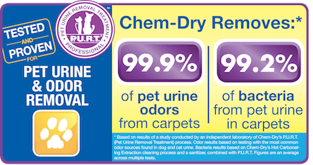 Chem-Dry of Springfield removes 99.9% of pet urine odors from carpets
